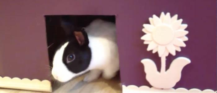 bunny-maze_lulu
